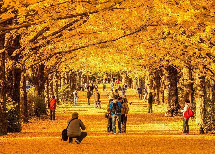 2. Meijijingu Gaien (Tokyo) – The Golden Ginkgo Promenade