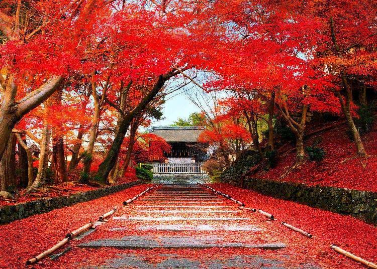 日本賞楓景點⑥毘沙門堂/京都府
