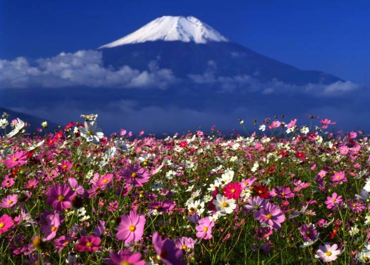 7. Autumn is a gorgeous season for flowers!