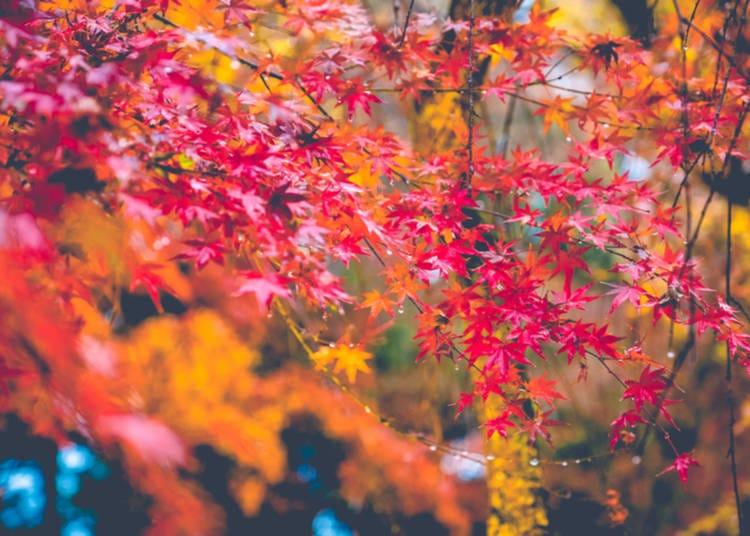 Beautiful Autumn Natural Scene Yellow Tree Mouse Pad