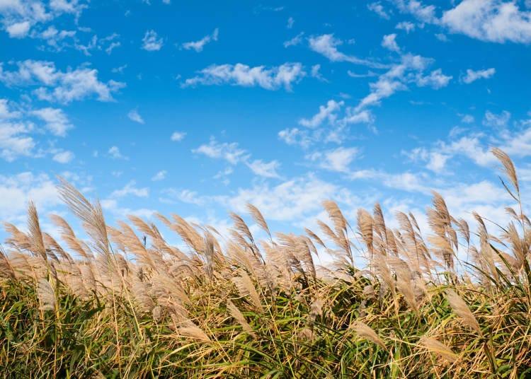 ●10월 - 맑은 날씨가 이어지는 여행 시즌에 돌입!