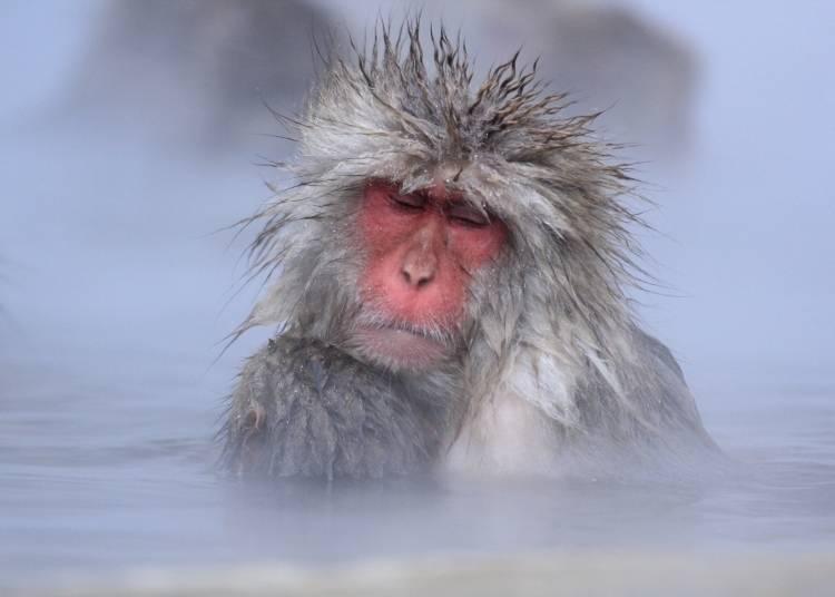 1. Jigokudani Monkey Park (Nagano)