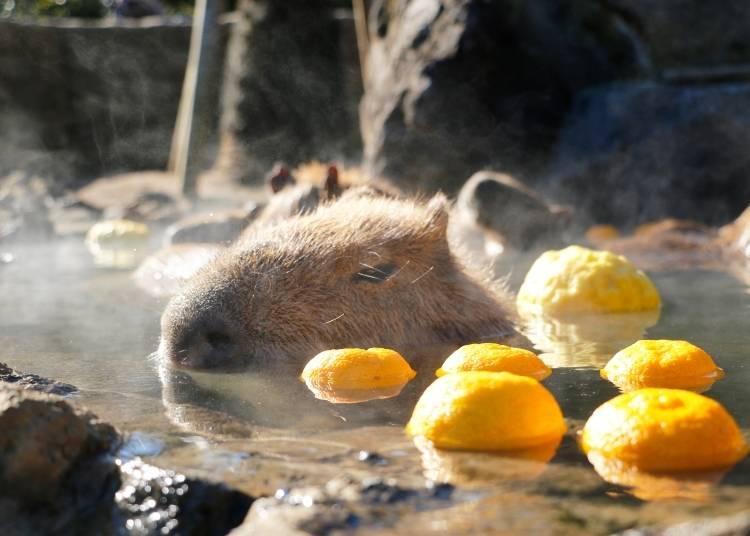 2. Izu Shaboten Zoo (Shizuoka)
