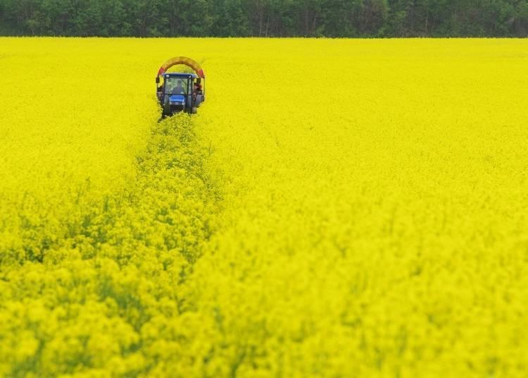 【安平町】美麗的花卉與農業的小鎮。全新誕生!以日本SL蒸汽火車作為主題的國道休息站!