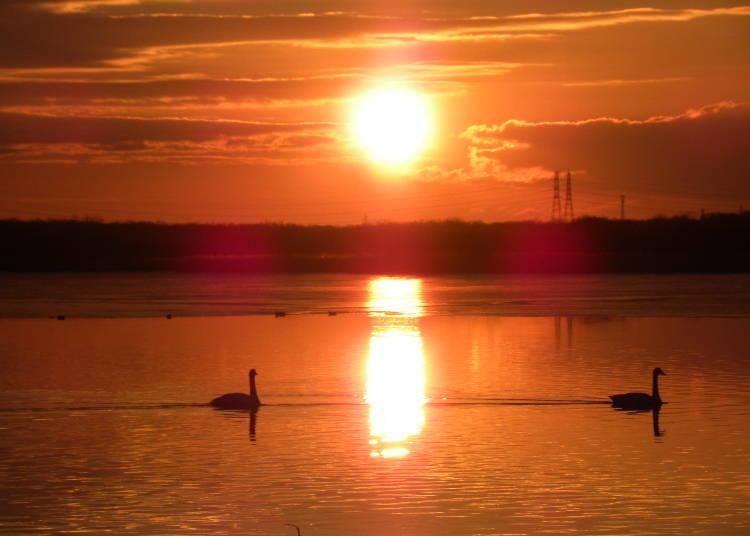 【苫小牧市】膽振東部的入口「宇都內湖」觀賞水鳥取得心靈的平靜