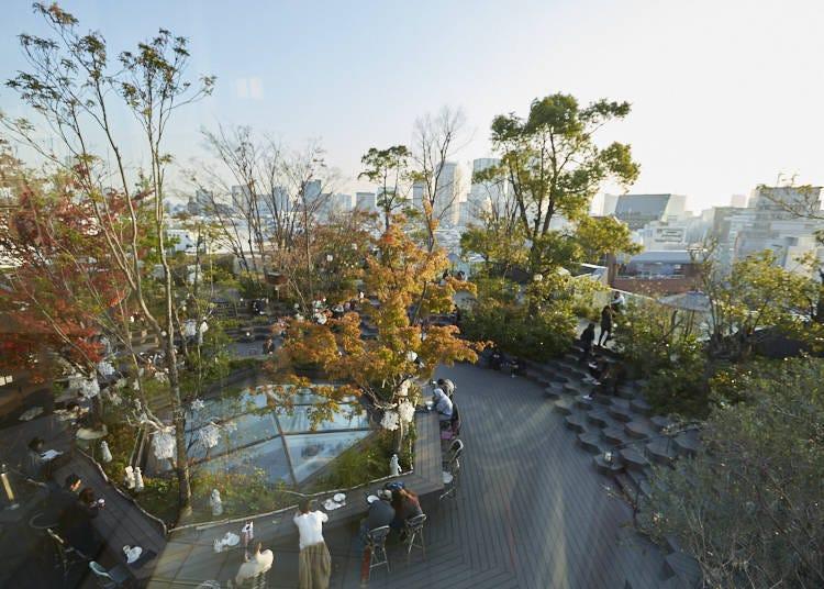 都会の真ん中で草木のいぶきや鳥のさえずりを感じられる癒しスポット「おもはらの森」