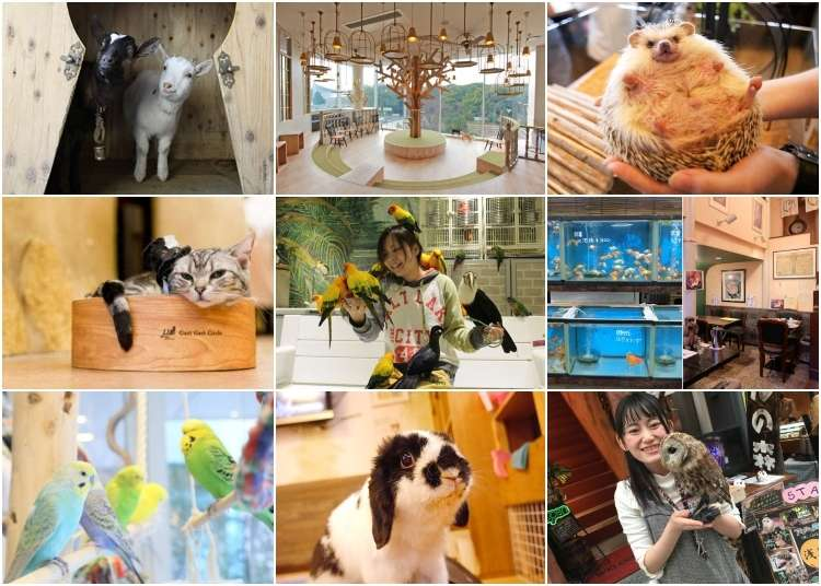 9 Cute and Cuddly Animal Cafes in Tokyo