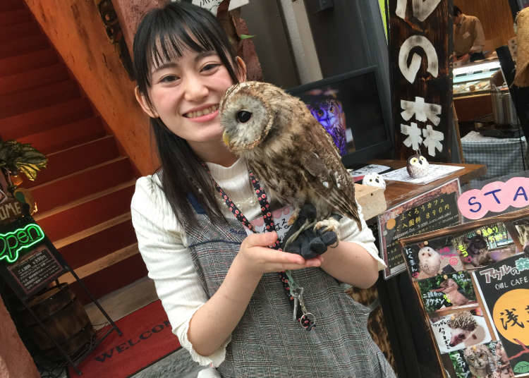 1. Owl no mori - Owl Cafe