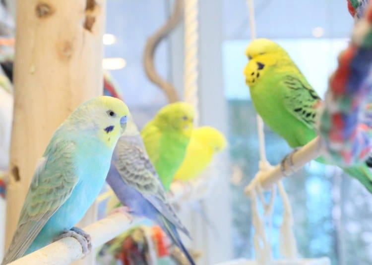 7. Kotori Café - Bird cafe