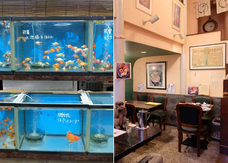 5. Kingyozaka - Goldfish Cafe