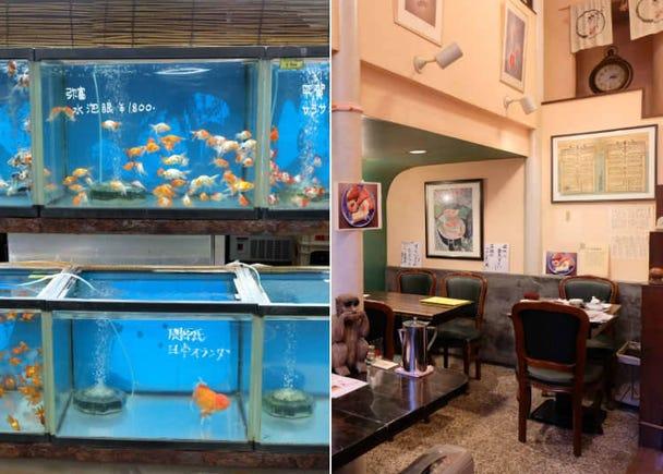 5. Kingyozaka - Goldfish Cafe