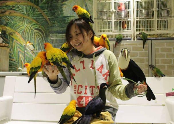3. Torinoiru Café - Parrots, Parakeets and other birds