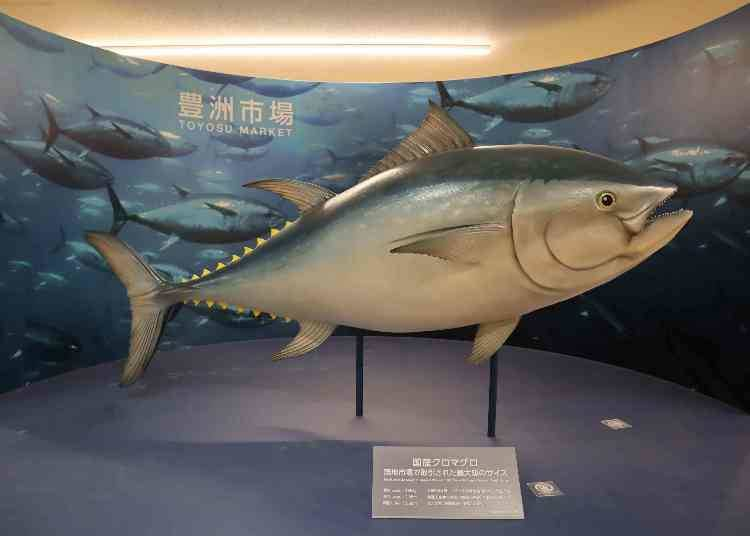 The tuna auction comes to mind when you think of the market! You can see it in the Marine Products Wholesaler Area!  ■Block 7: Marine Products Wholesalers Area