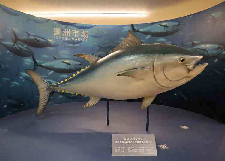 The tuna auction comes to mind when you think of the market! You can see it in the Marine Products Wholesaler Area! 