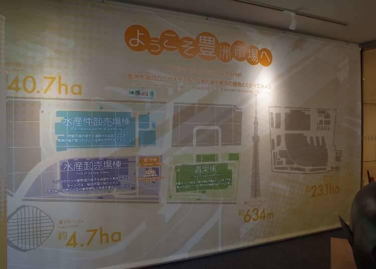 豐洲市場的特色 ①豐洲市場佔地超越築地!