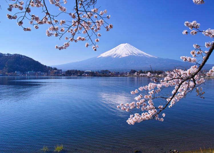 每日出發直達富士山河口湖「富士回遊」交通超便利!盡賞絕美景點的1日、2日行程推薦