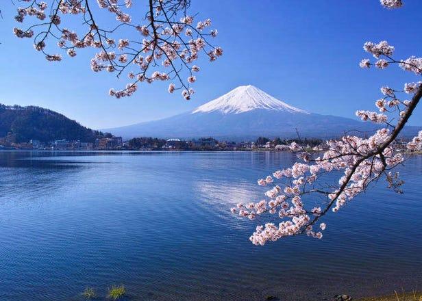 每日出發、直達富士山河口湖「富士回遊」交通超便利!1日、2日行程推薦