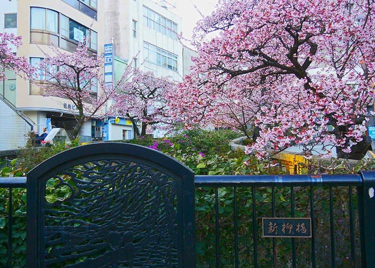 Where are Popular Places to Take Photos of Atami Sakura?
