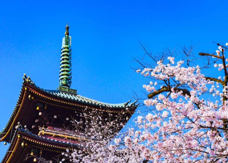 Spring Travel Guide: 10 Tips for Visiting Japan in Spring!