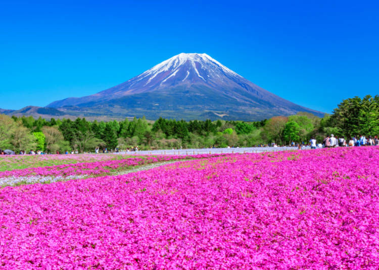 6. Not only cherry blossoms: check out what else is in bloom