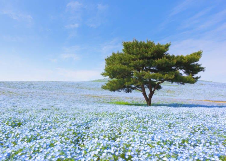 2. Visiting Japanese flower gardens
