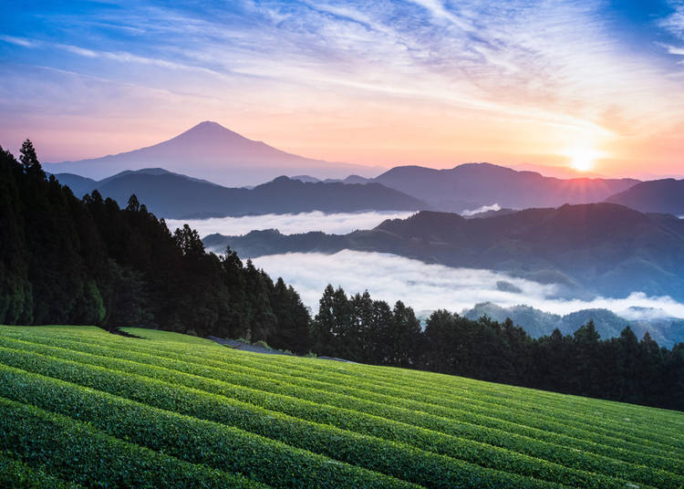 5. Green Tea Plantations
