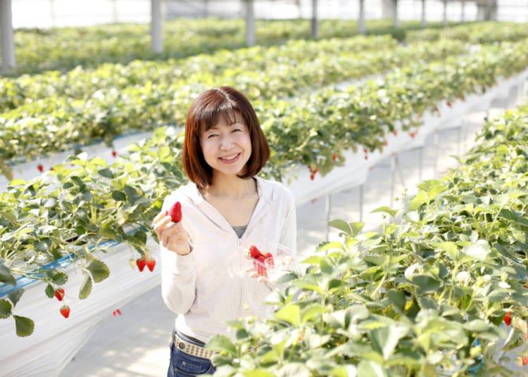 7. Strawberries