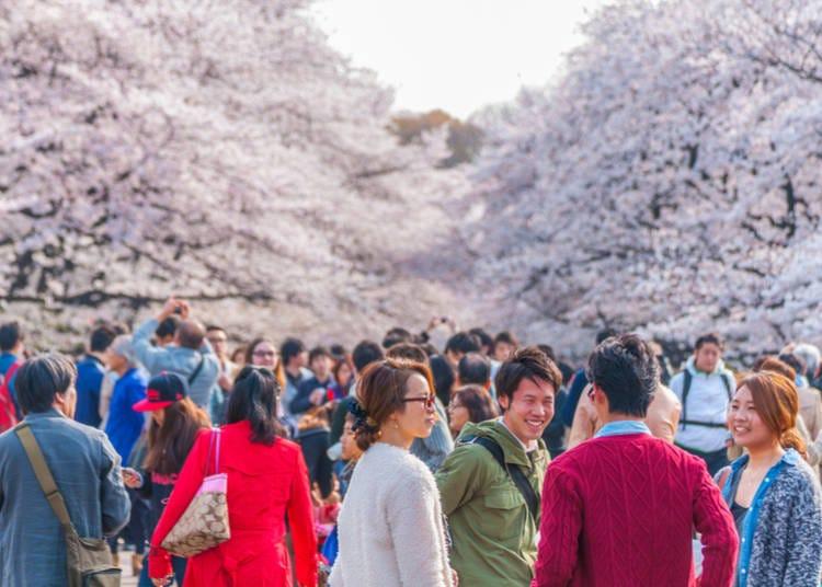 도쿄에서 벚꽃 시즌을 즐기는 장소? 우에노 공원입니다!