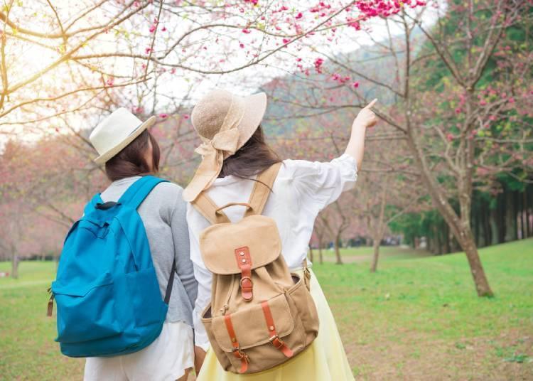 벚꽃놀이에 챙겨가야할 것들!