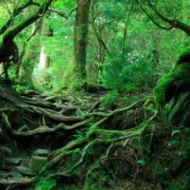 Explore Aokigahara, the Sea of Beautiful Trees!