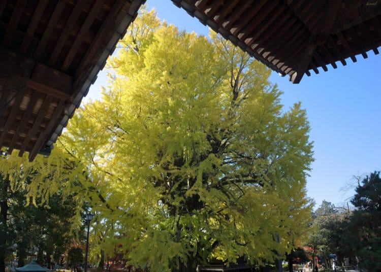 5 – Bannaji Temple – Ashikaga, Tochigi