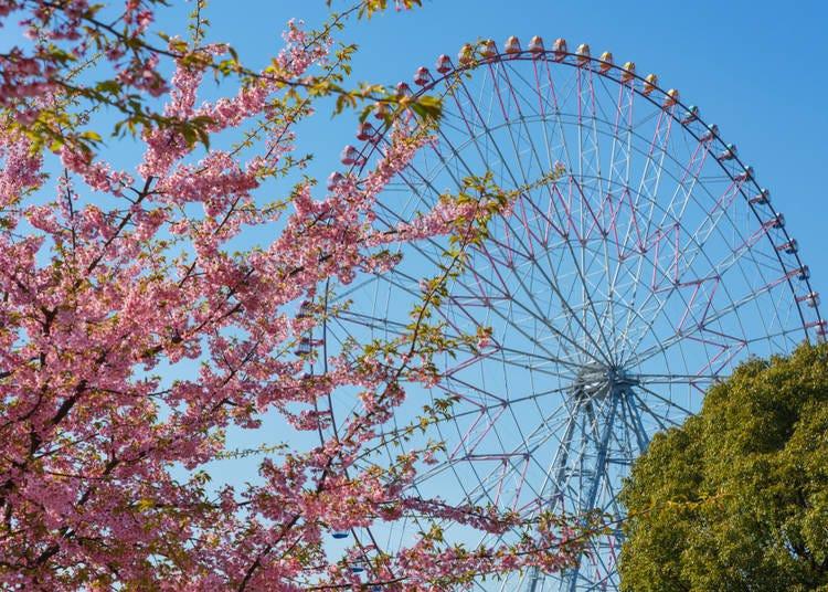#18. 葛西臨海公園 - Kasai Seaside Park (Kasai Rinkai Koen) (139.1k Photos)
