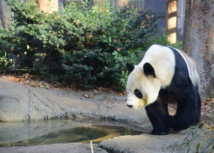 #9. 上野動物園 - Ueno Zoo (521.2k Photos)