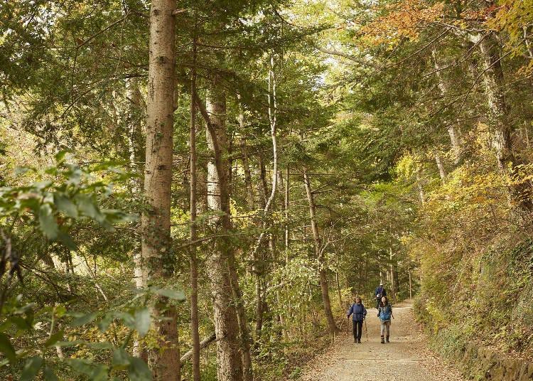 【推薦景點③】高尾山山頂絕對不能錯過!走人少的富士路線最方便!這是內行人才知道的喔