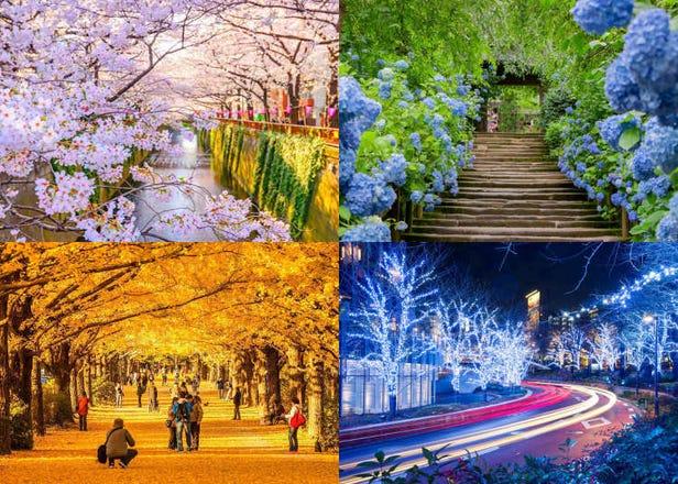 東京每個月都很可以玩!盤點1~12月各月份的東京旅遊亮點&推薦景點