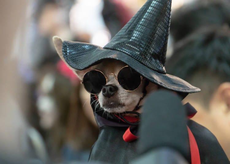 October: Halloween Celebrations!