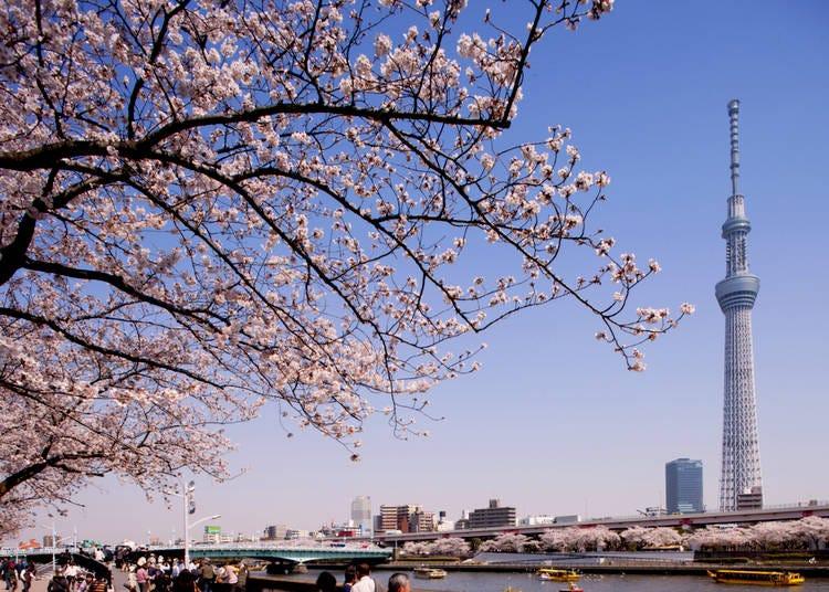 Spring Highlight #1: Asakusa and the Sumida River