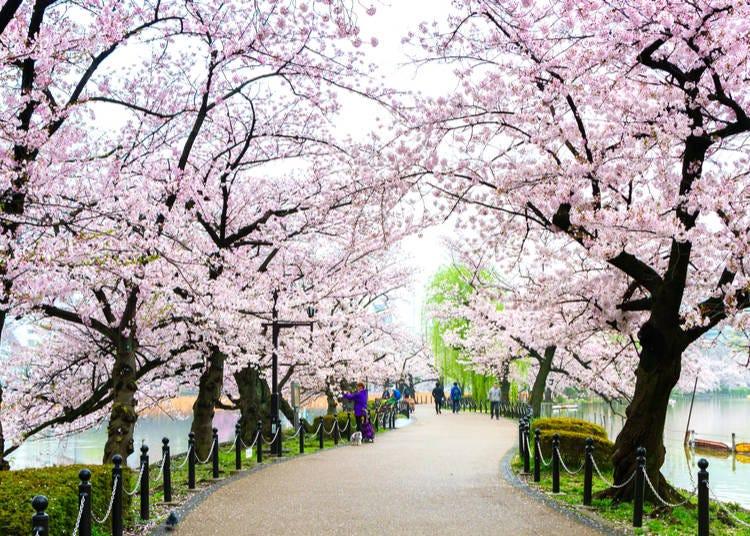 Spring Highlight #3: Ueno Park