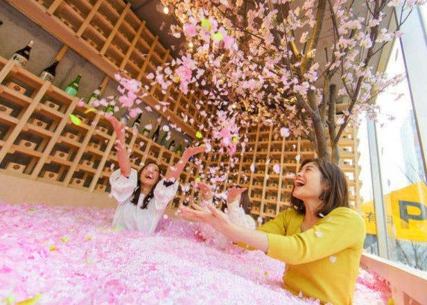 """일본 벚꽃여행 - """"아싸들을 위한 120만장 벚꽃잎 풀장 벚꽃놀이"""" 한손에는 사가의 딸기 사케를!"""