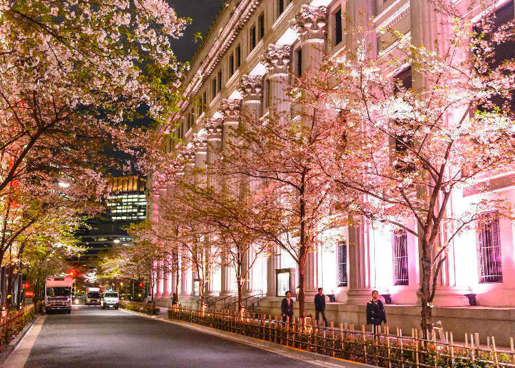 Savoring Spring at the Tokyo Nihonbashi Sakura Festival 2019 - Celebrating Sakura, Food, and Japanese Culture!