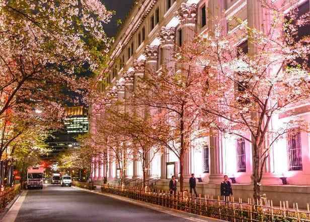COREDO室町的櫻花新體驗!愛上櫻花,品味櫻花「日本橋櫻花祭」