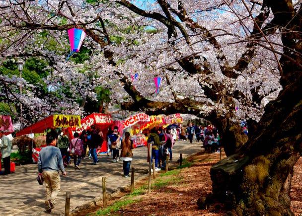 Saitama Prefecture (Average flowering date: March 29)