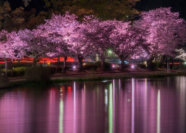 Ibaraki Prefecture (Average flowering date: April 2)
