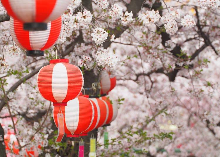東京&周邊各地櫻花種類、開花期懶人包!吉野櫻賞完還有八重櫻!