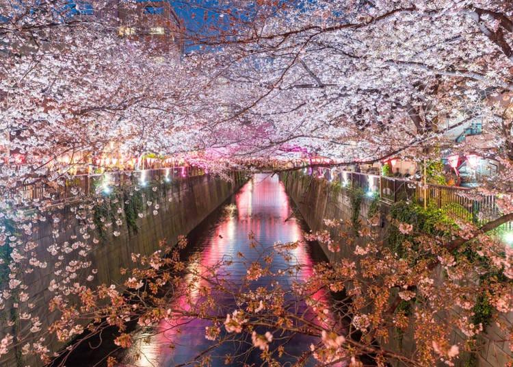 東京都(平均開花日期:3/26)