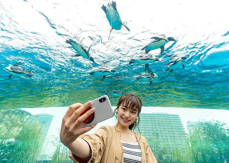 【東京池袋】太陽城Sunshine City 水族館&展望台中10個讓人怦然心動的魅力