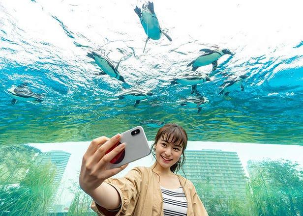【東京池袋】太陽城Sunshine City 水族館&瞭望台中10個讓人怦然心動的魅力