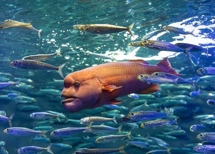 見見陽光水族館不同萌屬性的明星們