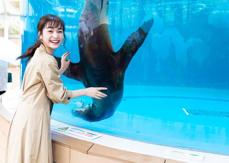魅力3.怕寂寞人來瘋的海獅