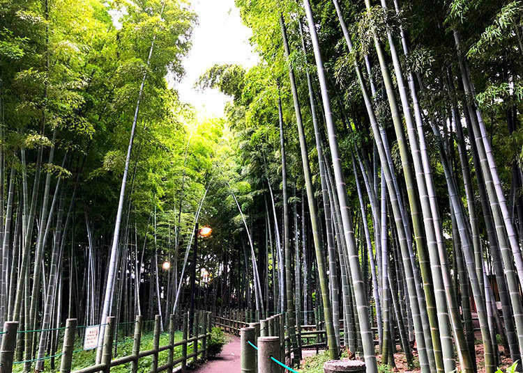 10. Walk in a bamboo forest